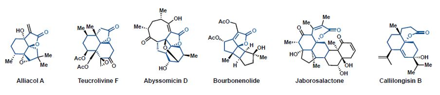 Structure Pattern Recognition: A Catalyst for Methodology Development in Total Synthesis