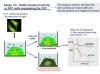 Compuestos destinados al tratamiento de la fibrosis quística facilitando el transporte de aniones a nivel celular